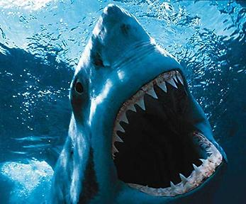 El Tiburon anda suelto en Puerto Cortes