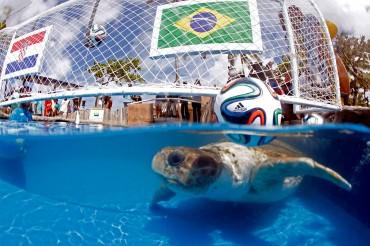 """La tortuga """"Cabecao"""" reemplaza al pulpo """"Paul"""" en predicciones de Brasil"""
