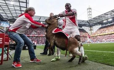 Celebra el gol con una cabra