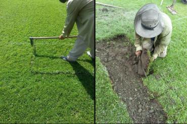 Pinto solicitó darle mantenimiento a la grama del Estadio Olímpico